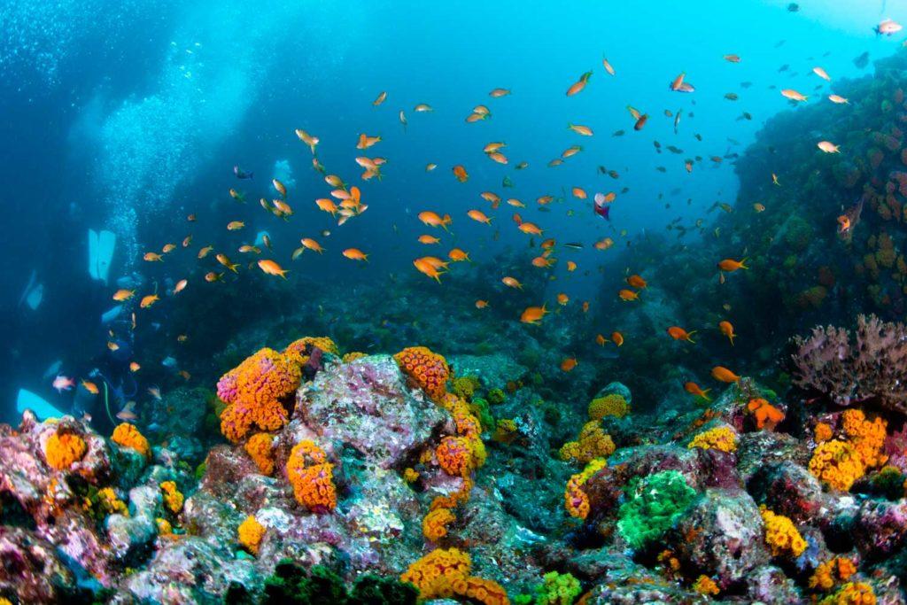 潮流のダイビング
