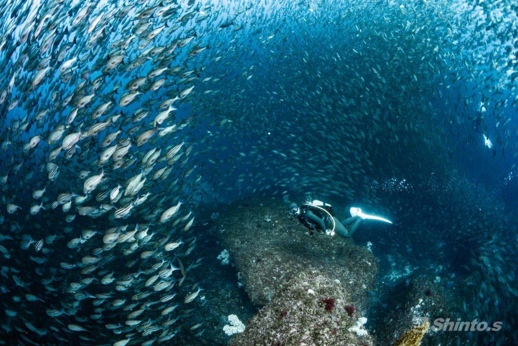 巨大な魚の群れ